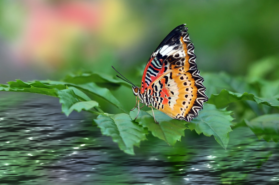 Photograph Butterfly by the bay by Khoo Boo Chuan on 500px
