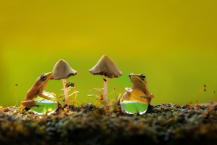 Photograph Playing Together by Ellena Susanti on 500px