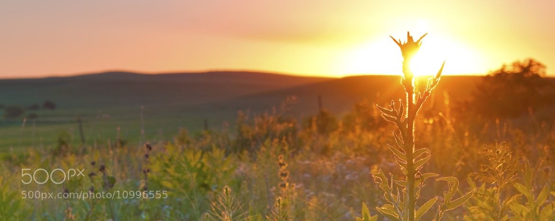 Photograph Grass Lands by Ryan Heffron on 500px