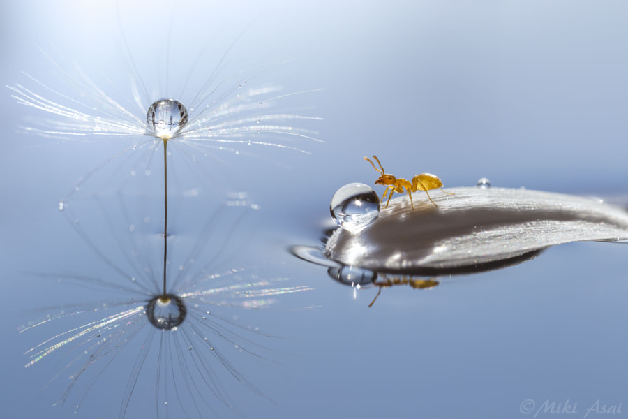 Photograph Ant's amusement park by Miki Asai on 500px