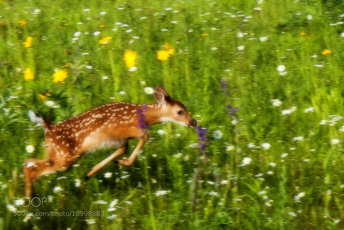 Photograph Flying Fawn by Ron Guernsey on 500px