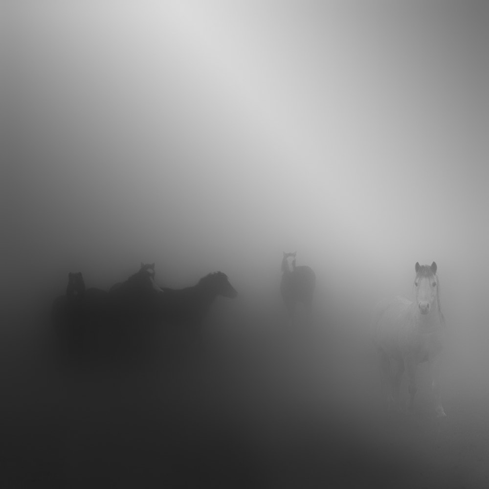 Photograph Fog by Kees Smans on 500px