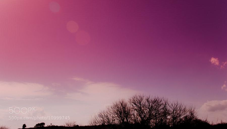 Photograph Violet by Wisnu Taranninggrat on 500px