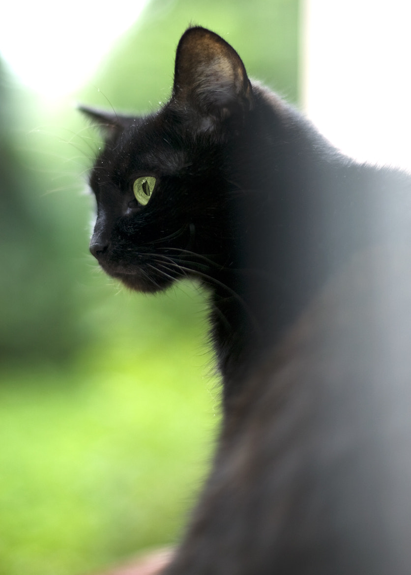Photograph Bagheera 2 by Andrii Derkach on 500px