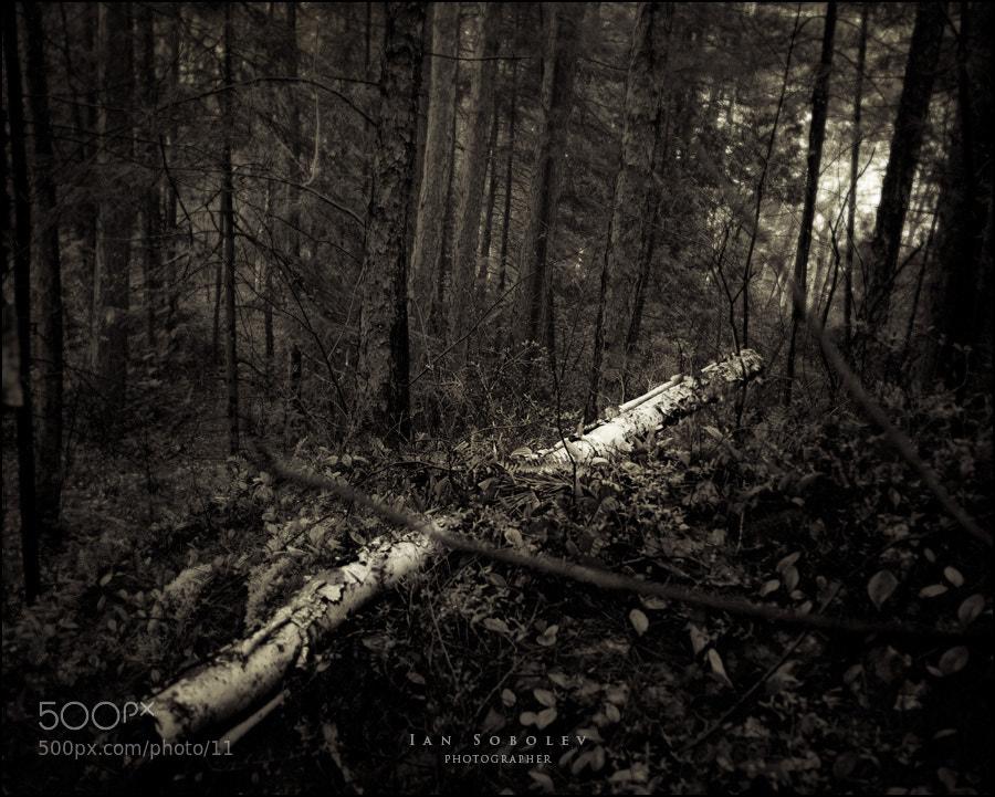 Photograph Untitled by Evgeny Tchebotarev on 500px