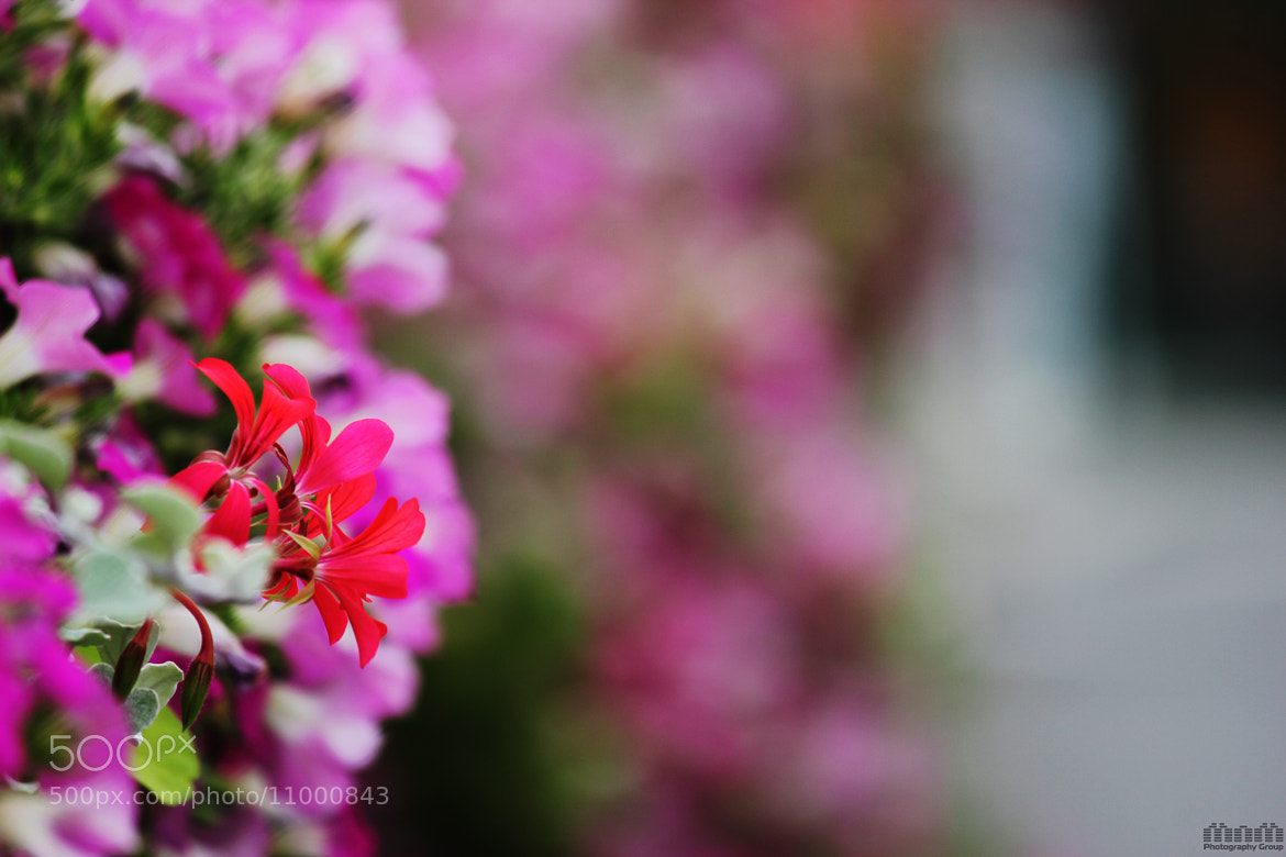 Photograph flower by mohsen raeisi on 500px