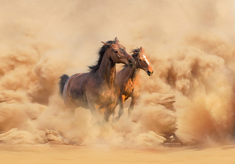 sandstorm by Victoriya Bondarenko on 500px.com