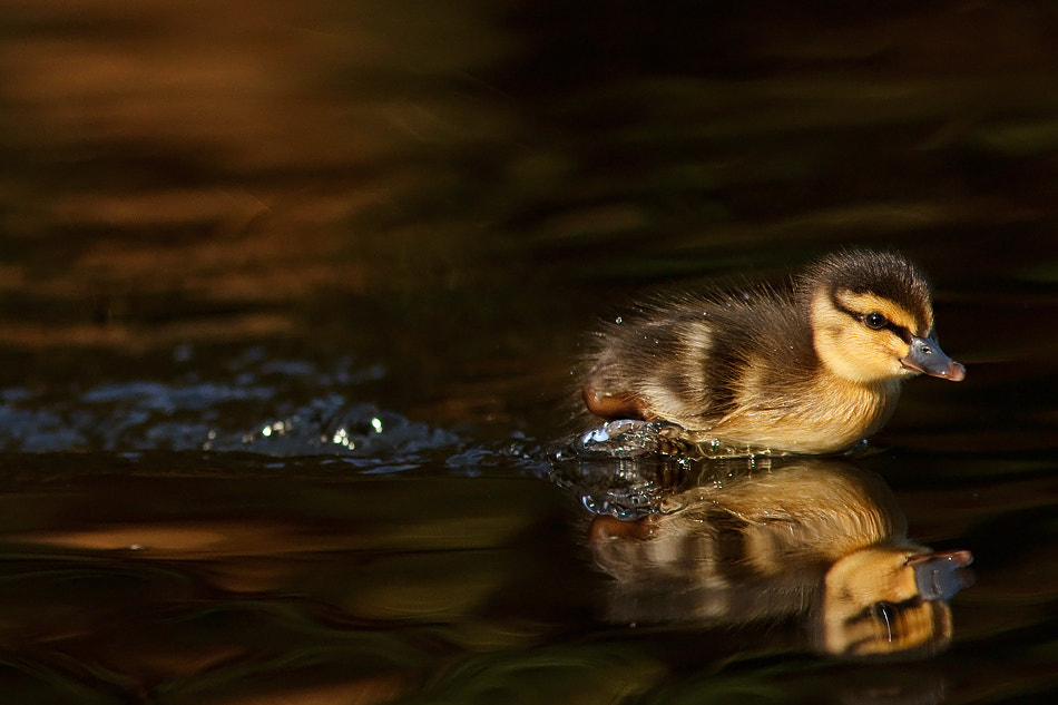 Photograph Got a Whole Lot of Living to Do by Roeselien Raimond on 500px