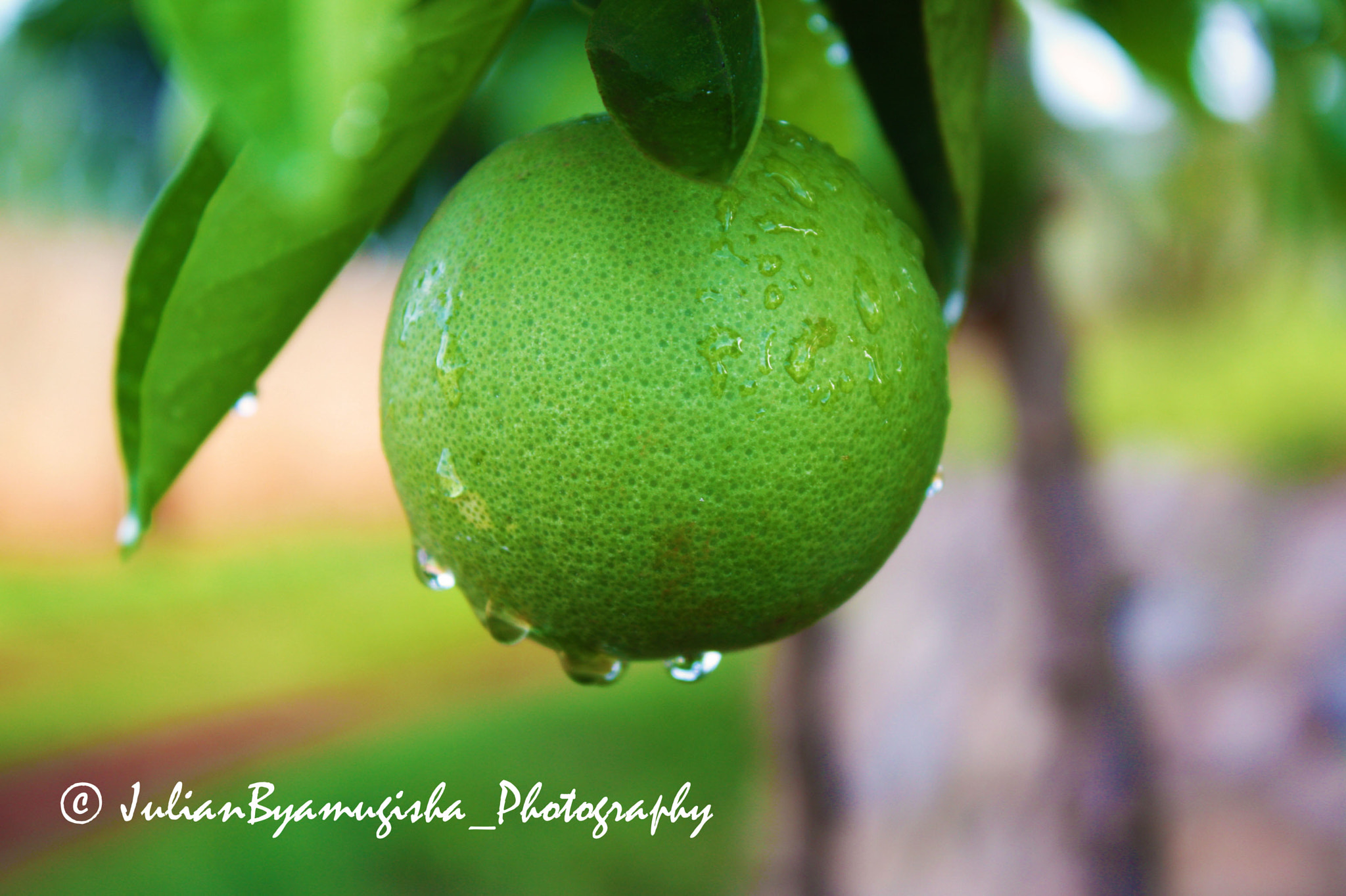 Photograph Wet Green Orange... by Julian Byamugisha on 500px