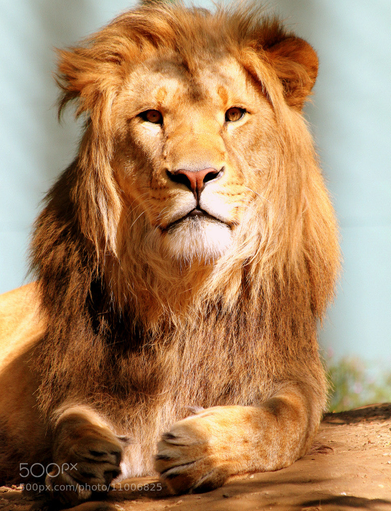 Photograph Young king under the sun by Rainer Leiss on 500px