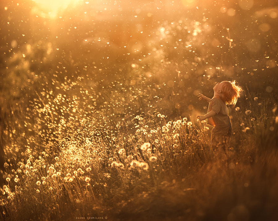 Photograph dandelion feeling.. by Elena Shumilova on 500px