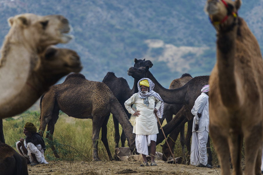 Patron of Camels by Mohammed Al Sulaili on 500px.com
