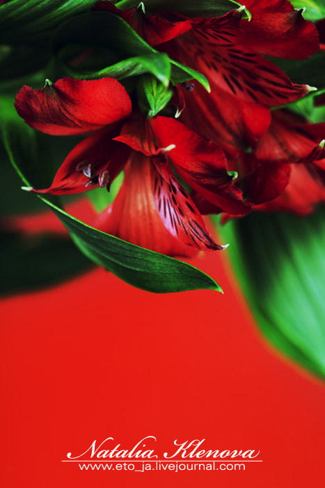 Photograph red by Natalia Klenova on 500px