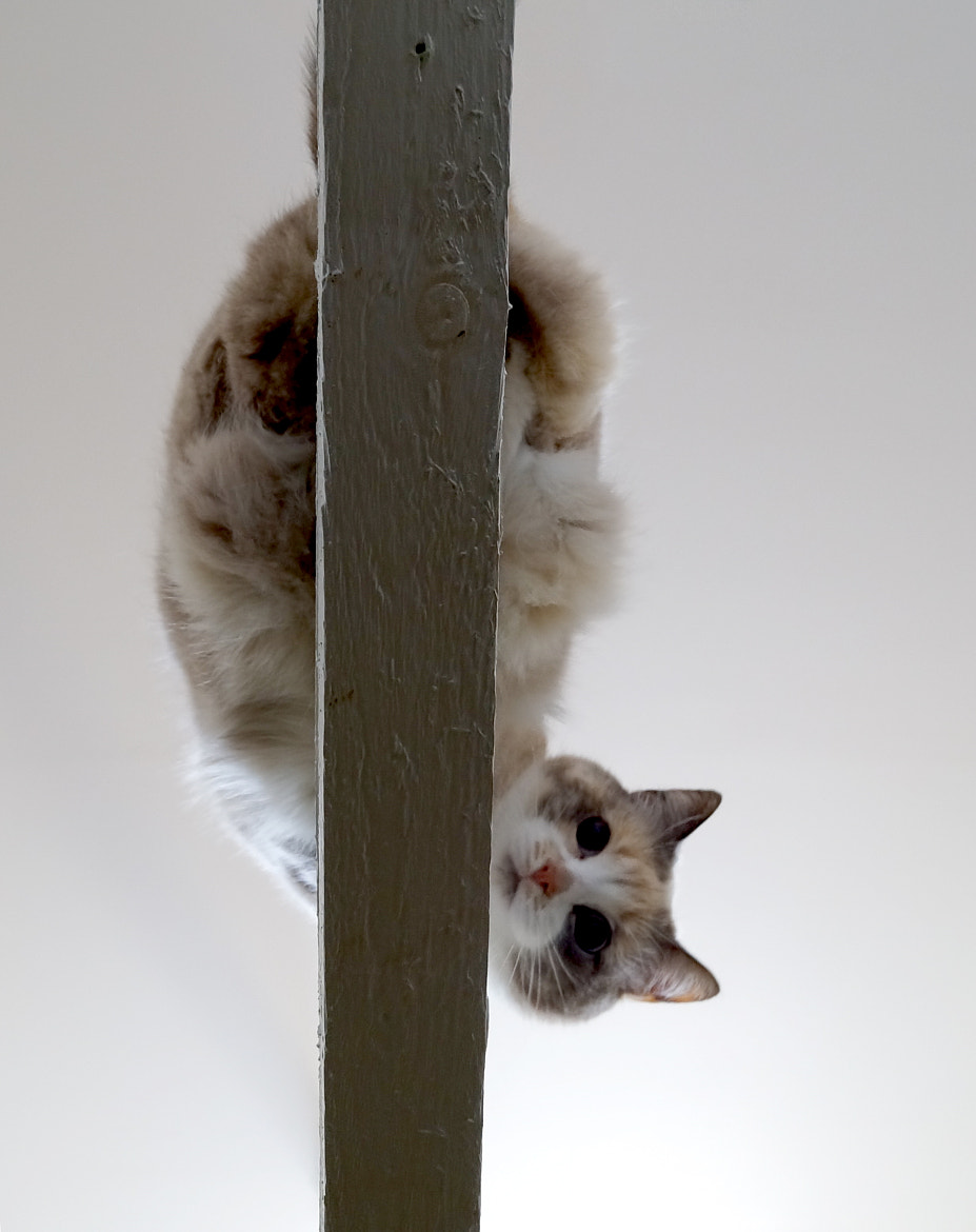 Photograph Little cat on the top  by Camilla Jeppesen on 500px