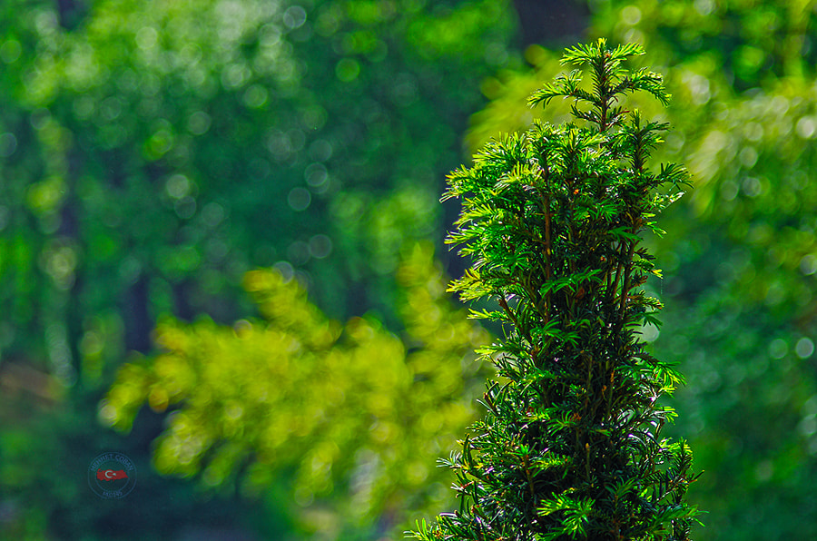 Photograph green natural theme by Mehmet Çoban on 500px