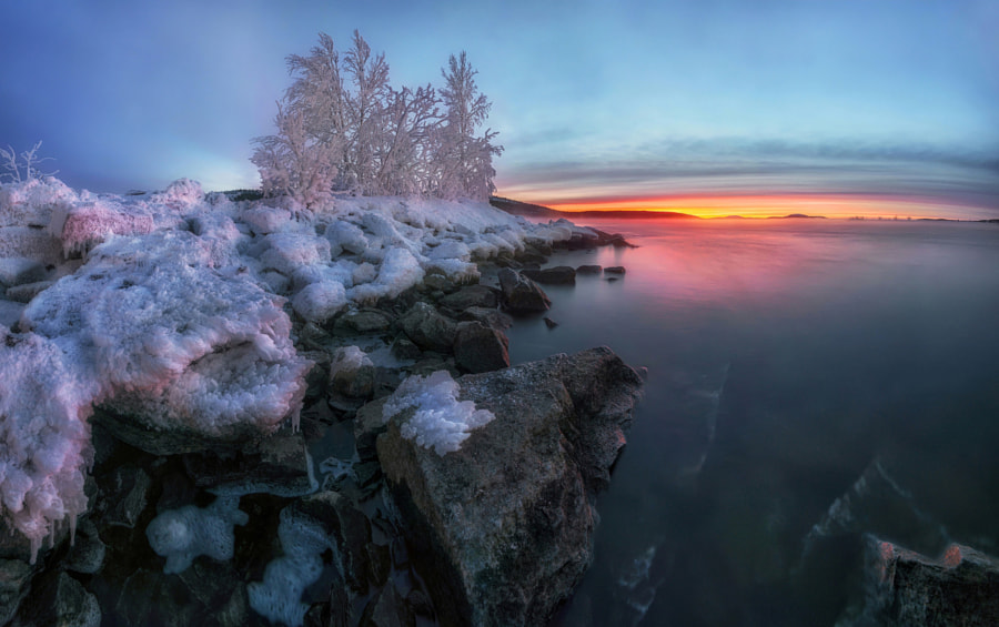 Covered with frost. by Andrey Grachev