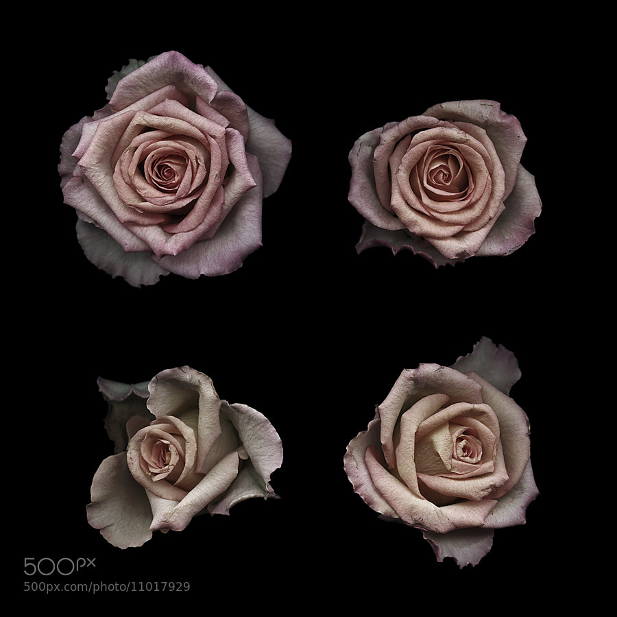 Photograph Petits four by Kate Scott on 500px