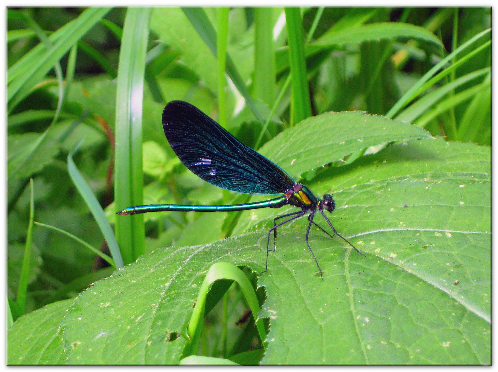 Photograph Dragonfly by Kirsten F. on 500px