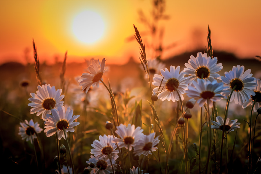Prairie Sunset by Mike Martin