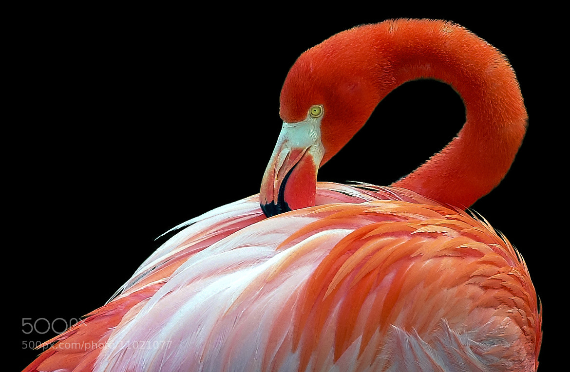 Photograph Pink by George Bloise on 500px