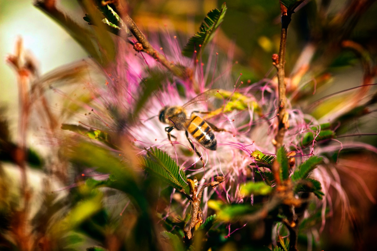 Photograph Bee by Andre Almeida on 500px