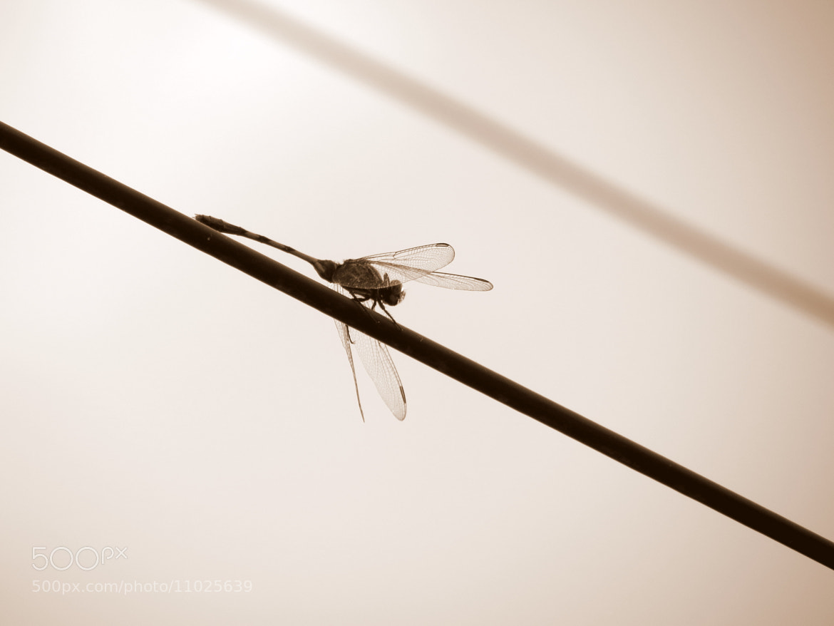 Photograph dragonfly by Milad Ghasemi on 500px