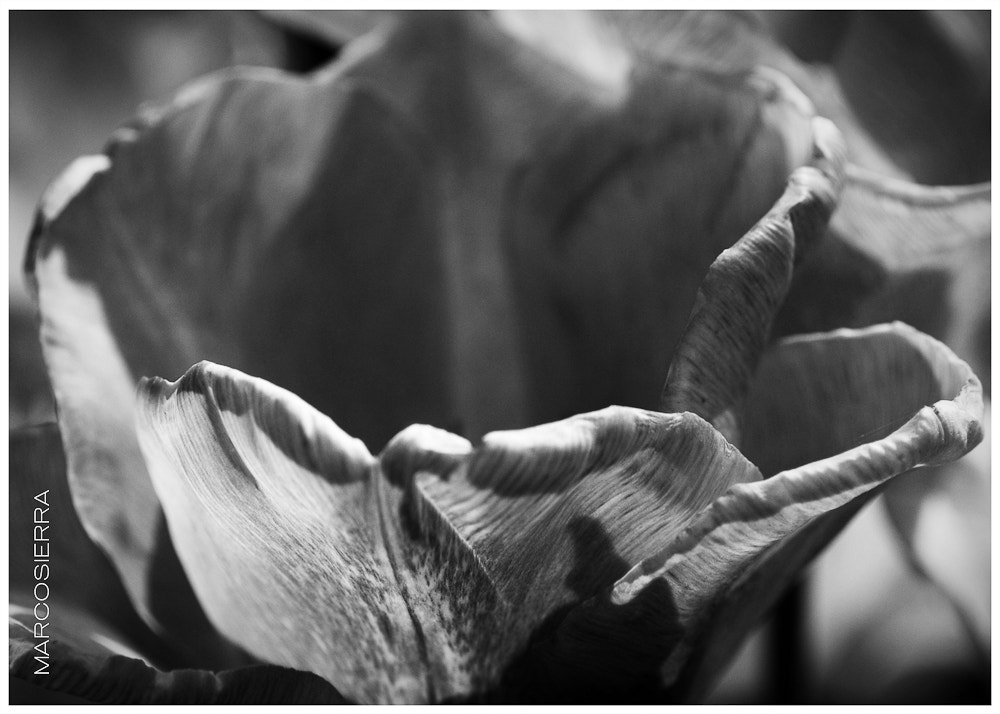 Photograph Flower 2 by Marco Antonio on 500px