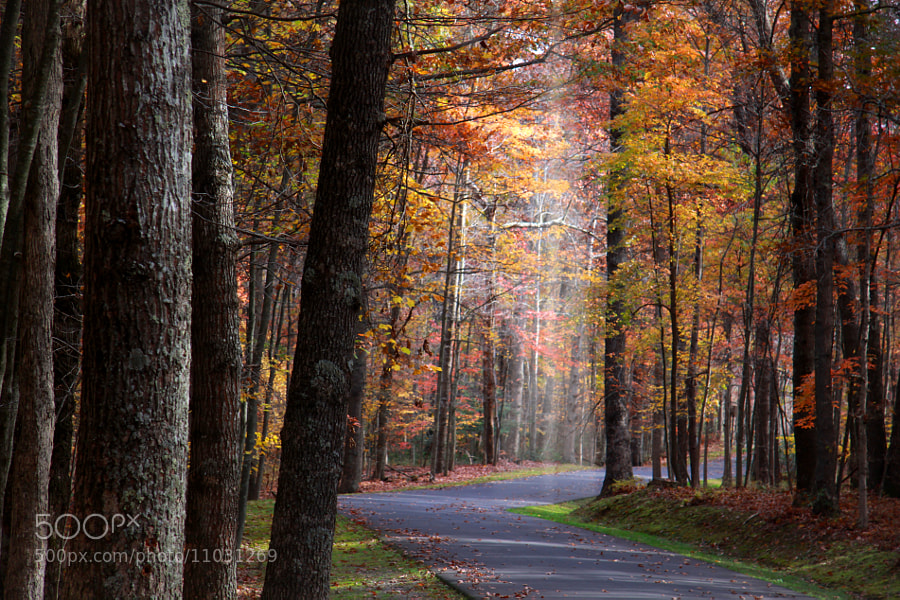 Photograph Autumn in West Virginia by S N E H I T  on 500px