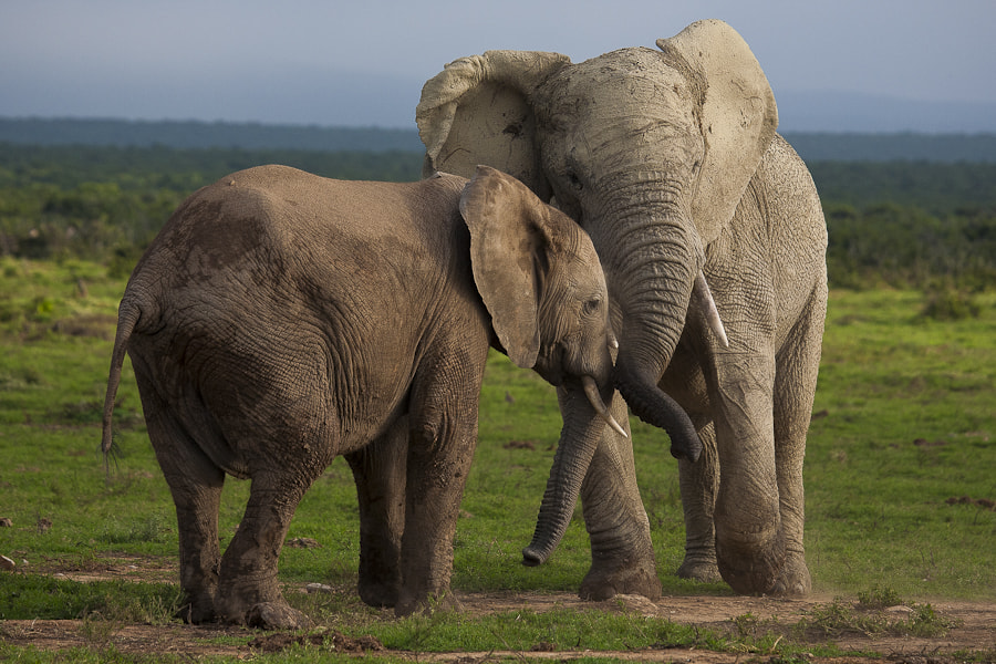 Photograph Addo Interaction by Mario Moreno on 500px