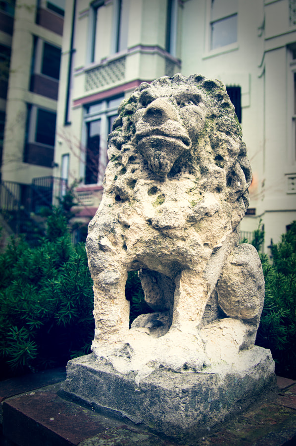 Photograph DC is for Lion by Andy Roth on 500px
