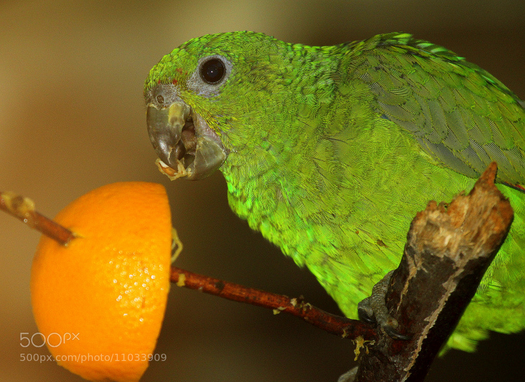 Photograph Mmh...delicious! by Rainer Leiss on 500px