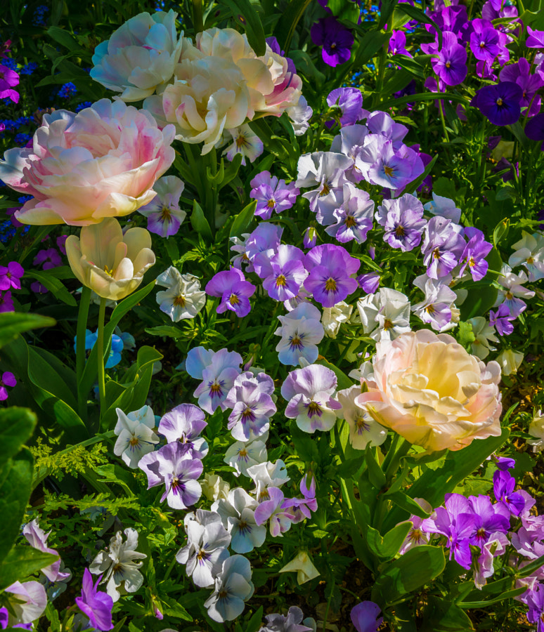 Photograph Bouquet From Monet's Garden by Pat Kofahl on 500px