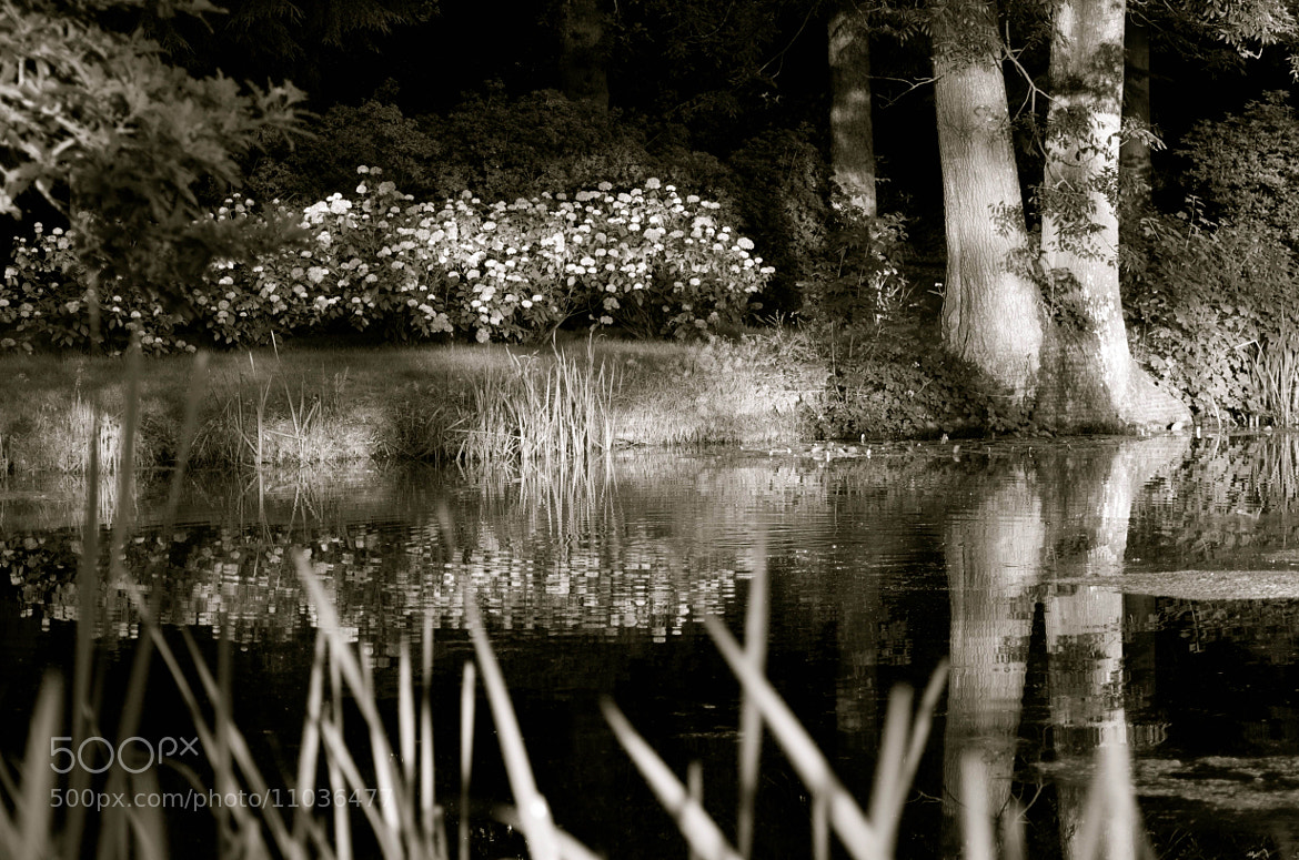 Photograph Reflections in black and white by julian john on 500px