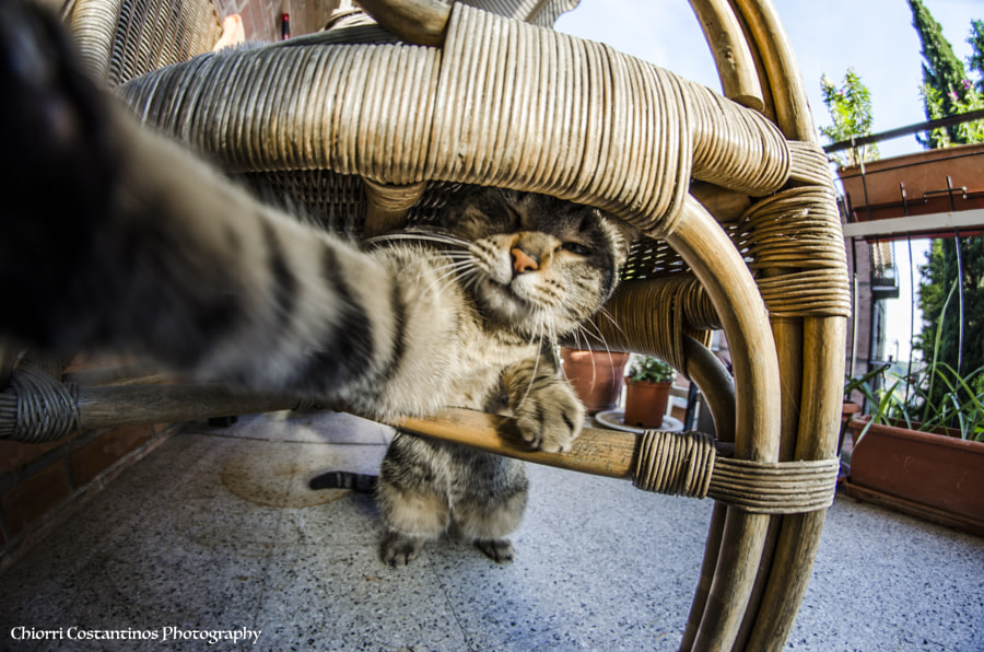Photograph Selfie Cat by Costantinos Chiorri on 500px