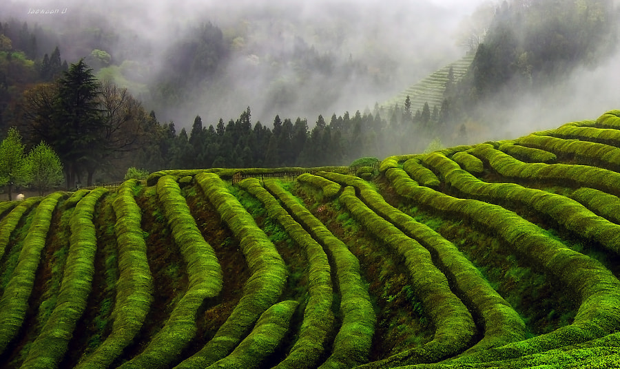 Photograph Misty by Jaewoon U on 500px