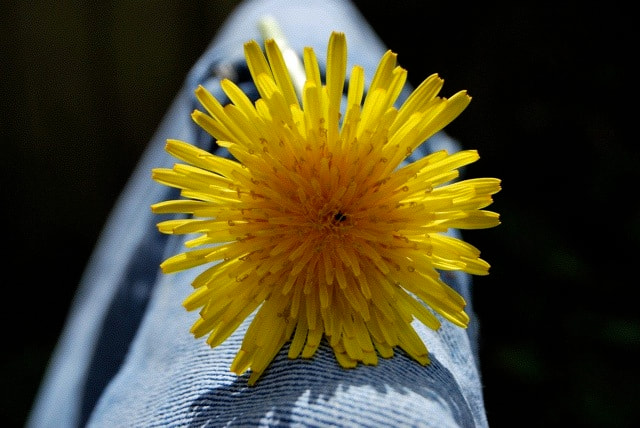 Photograph Dandelion by Lee Patterson on 500px