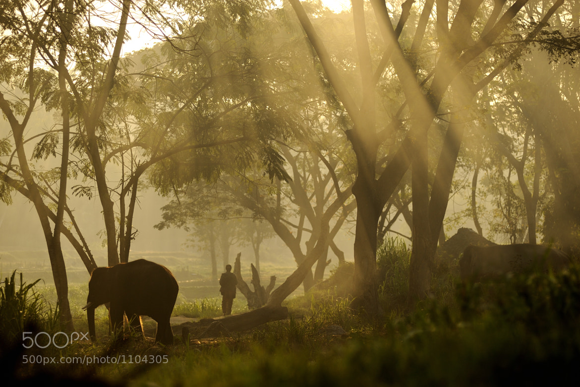 Photograph morning by Arkom Pimsarn on 500px