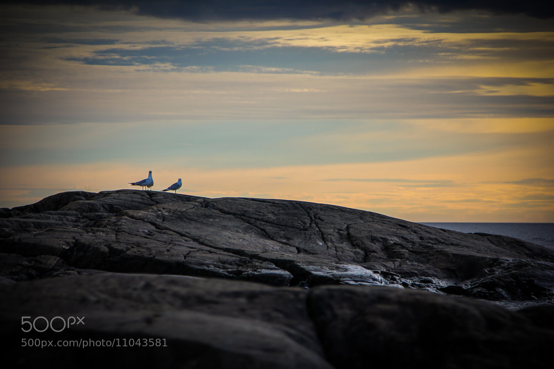 Photograph Sunset seagulls by Magnus Blomqvist on 500px