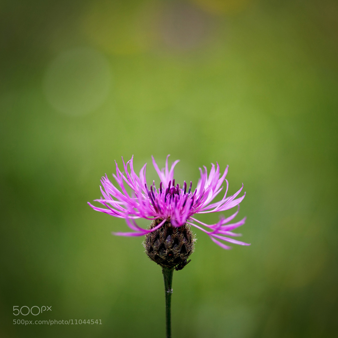 Photograph 45 by Ben Gudard on 500px
