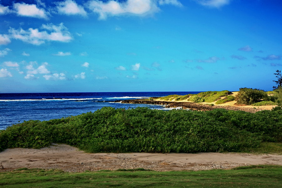 Photograph Turtle Bay Golf Course by Samuel Lie on 500px
