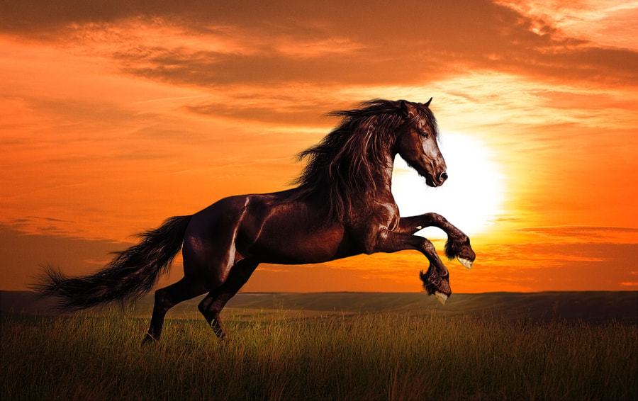 Zorro's horse