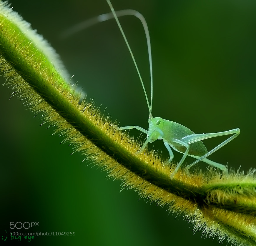 Photograph slow walking ....  ....  .. . . .. . . .    ! by bug eye :) on 500px