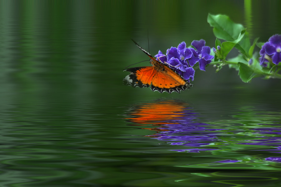 Photograph Butterfly by the bay 2 by Khoo Boo Chuan on 500px