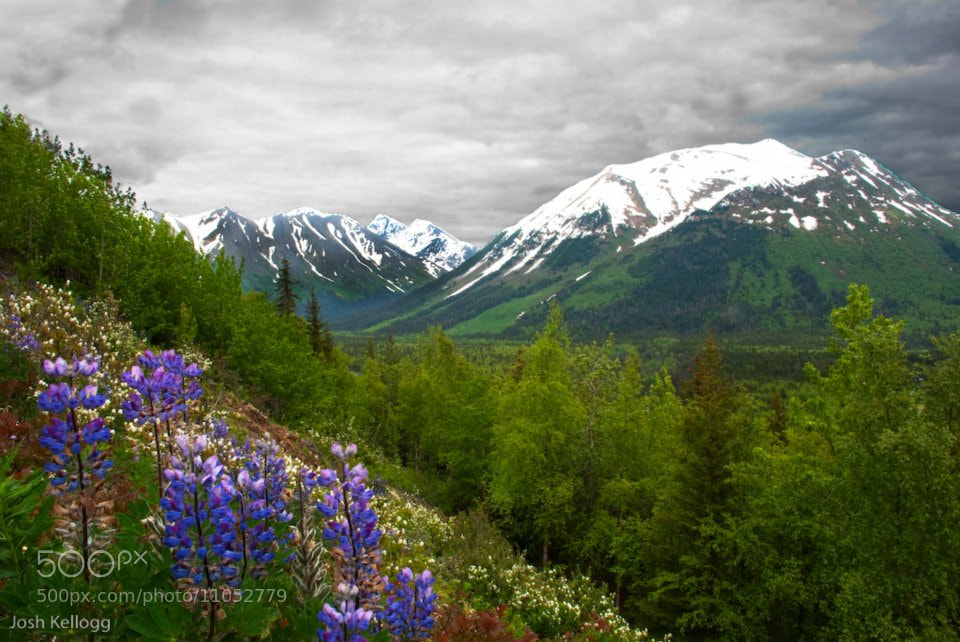 Photograph Storm over the Chugach Mountains by Josh Kellogg on 500px