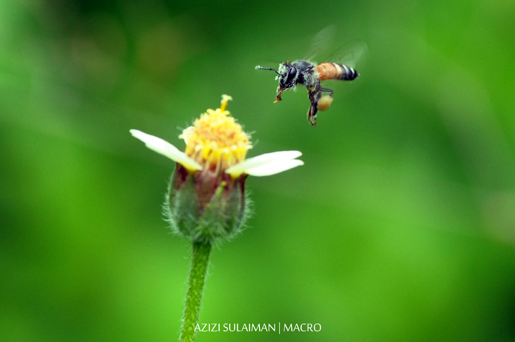 Photograph About to Landing by Azizi Sulaiman on 500px