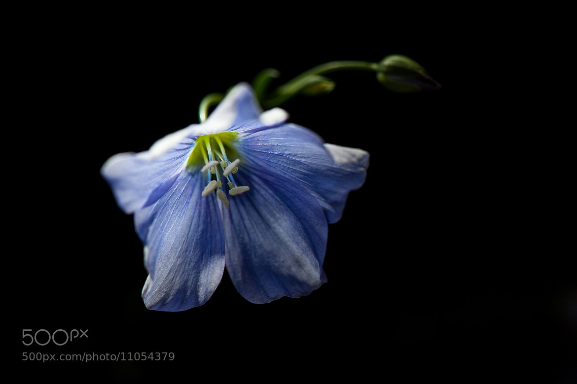 Photograph Blue by Justin Lo on 500px