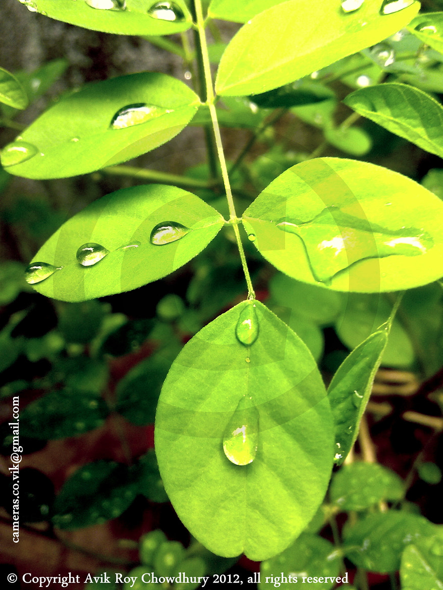 Photograph Raindrops by Avik  Roy Chowdhury on 500px