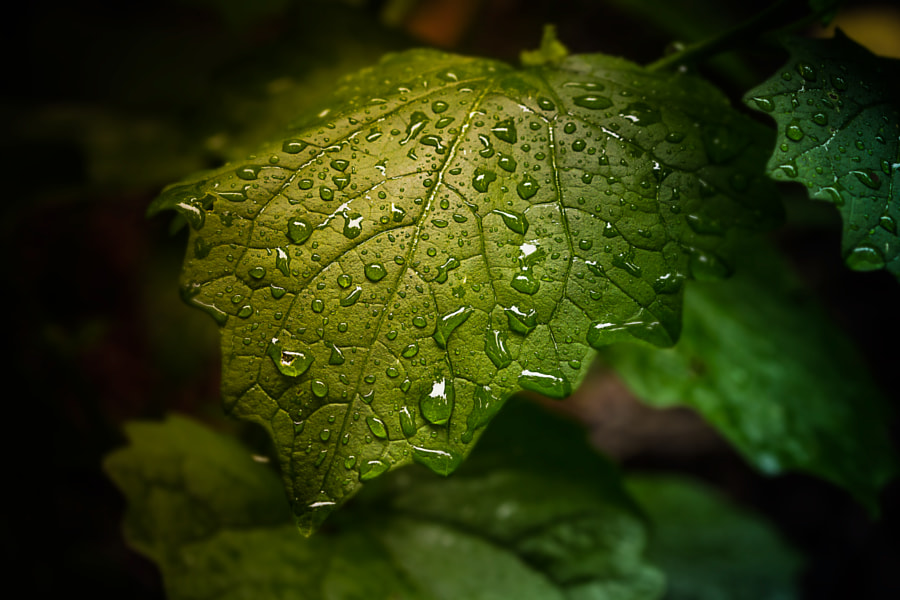 Morning Dew by Olivier Ferrari on 500px.com