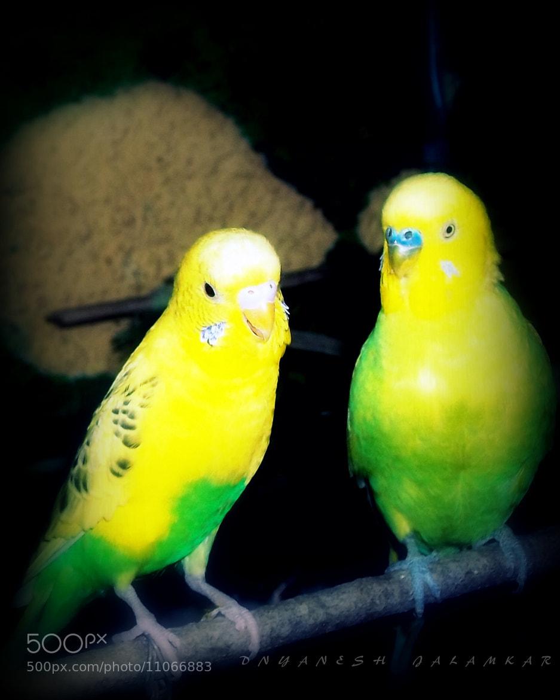 Photograph Birds by Dnyanesh Jalamkar on 500px