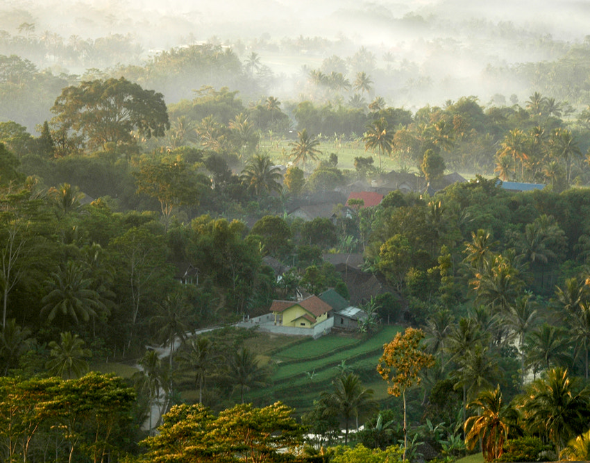 Photograph MISTY MORNING by Edi Wibowo on 500px